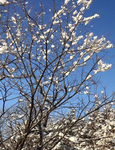 枝に咲く雪の白い花~北見冬の風景より